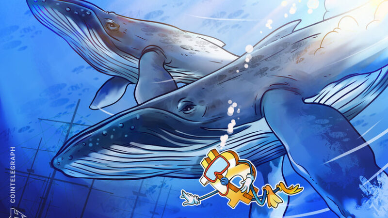 Bitcoin whale explains to Bloomberg why crypto volatility will decline