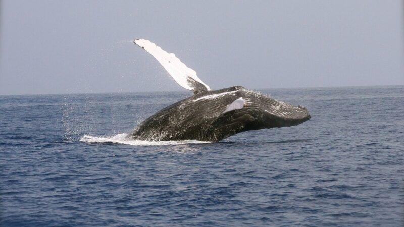 $750 miljoen aan BTC werd er door whales opgekocht