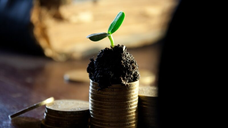 Deze vijf DeFi-munten kunnen flink gaan stijgen, aldus Michaël van de Poppe