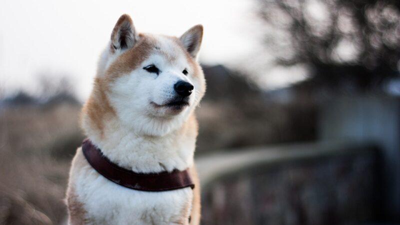 Dogecoin op weg om de top drie positie te bemachtigen?