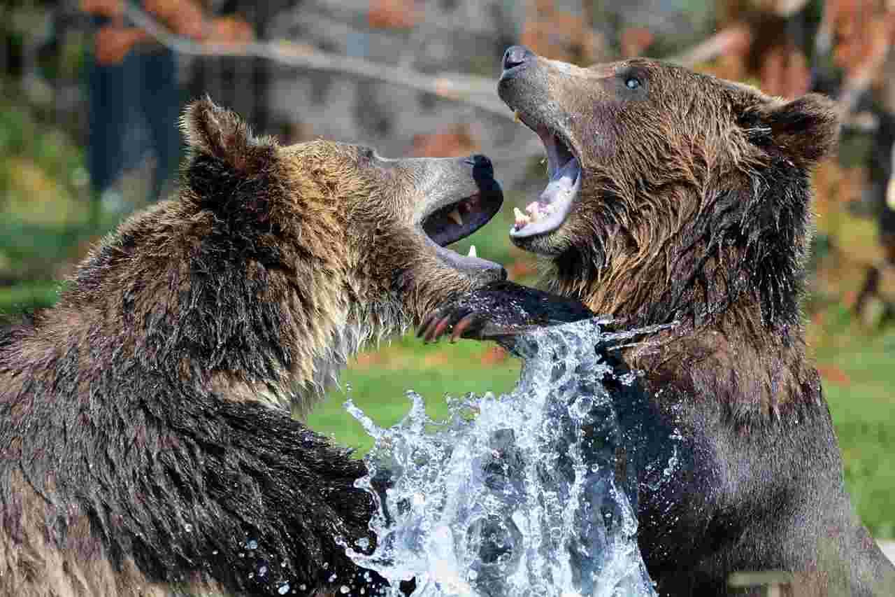 JPMorgan waarschuwt voor potentiële bearmarkt